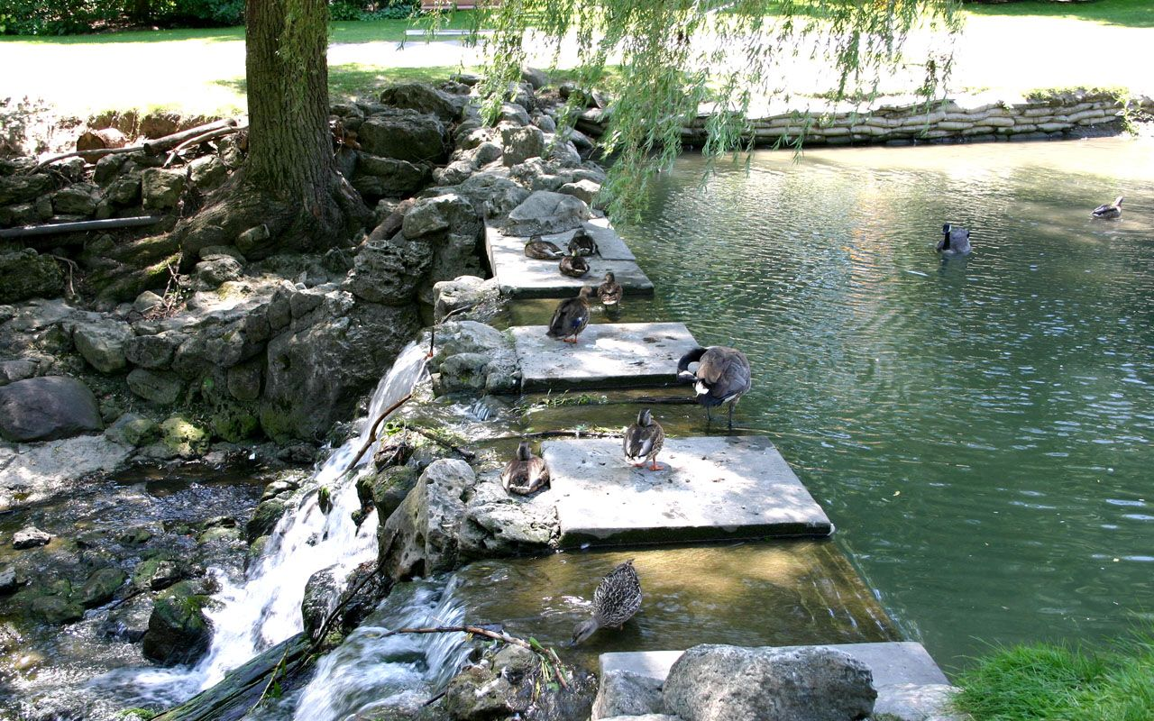 Exceptionnel Stream And Ducks At Edwards Gardens