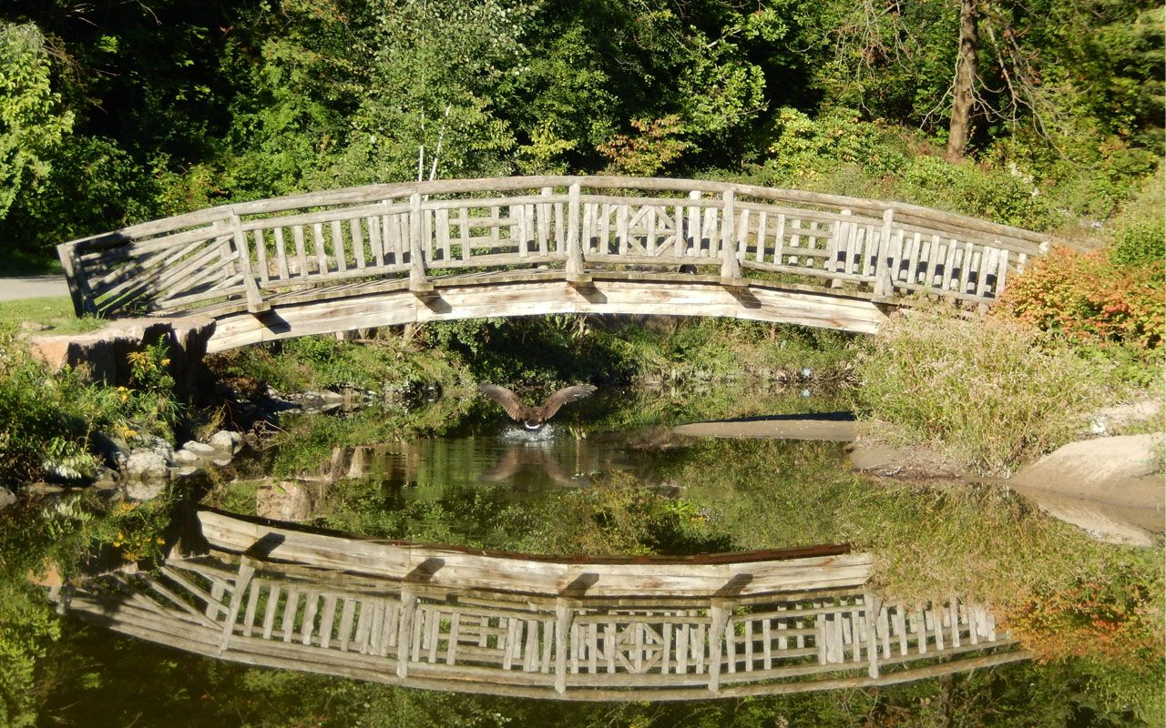 Bridge Over The Stream At Edwards Gardens