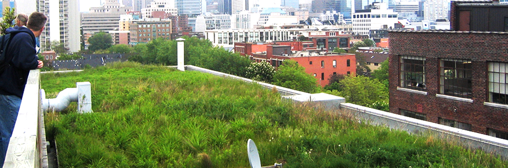 A Toronto green roof top.