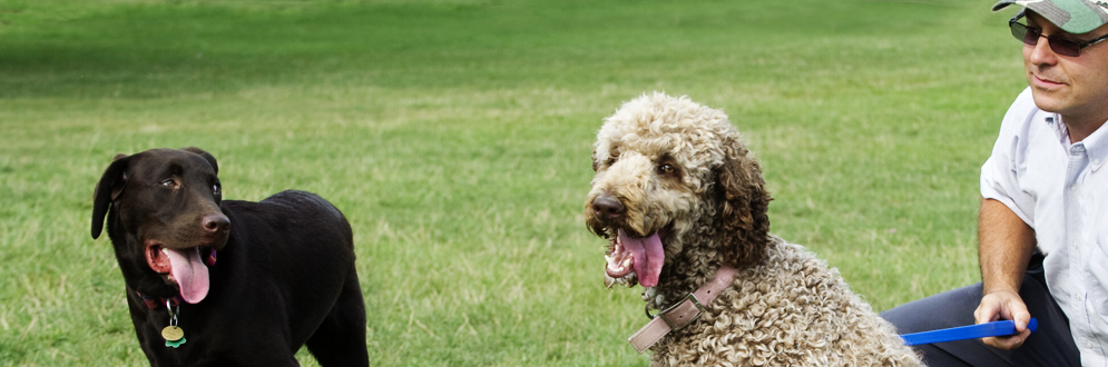 dog off-leash areas in Toronto park