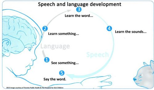 5 steps for a child to learn how to develop speech and language