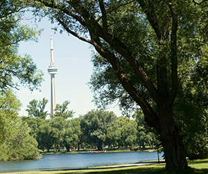 The CN Tower peeking out from the tops of trees