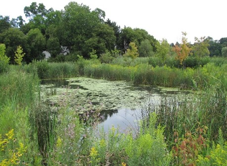 Bluffer's Park wet pond featuring a flow balancing system