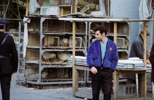 Man in a blue jacket stands in front of stacks of cages full of chickens.