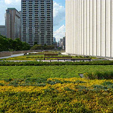 Image of Toronto City Hall's Podium Green Roof
