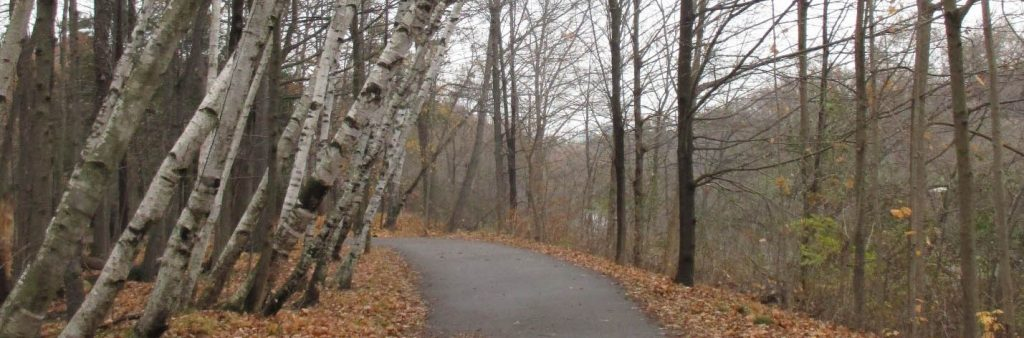 Paved multi-use trail through autumn forestin Lambton Woods ESA