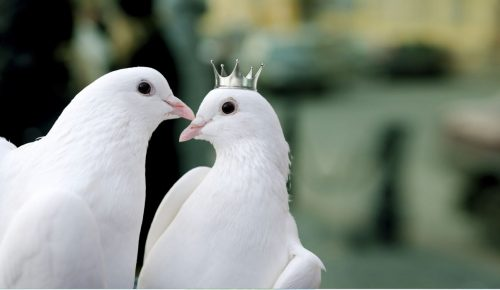 Doves. one wearing crown.