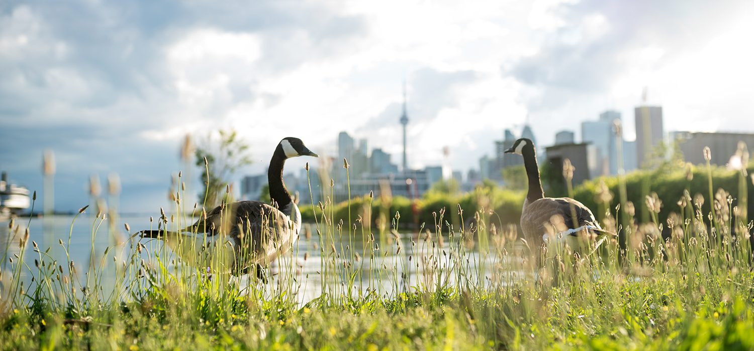 Snap and Share Photo Contest Youth Winner - Geese on the Horizon, taken at Polson Pier by Rocco Zoccoli
