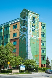 Six-storey mural of a tree on the side of a building