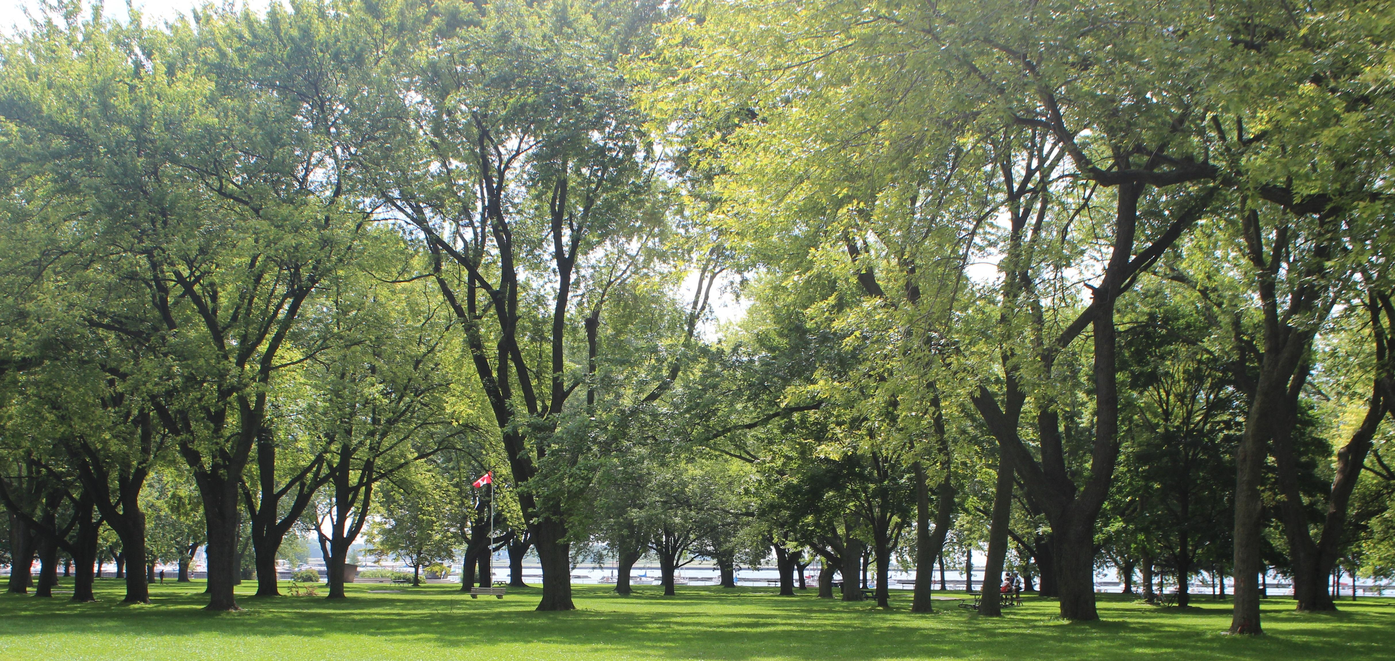 Tree Planting Strategy City Of Toronto