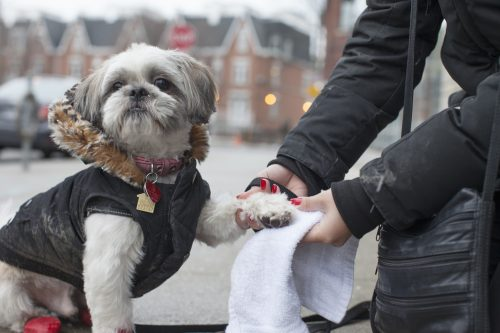 Dogs In The City City Of Toronto
