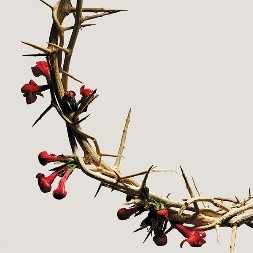 thorny vine with red flower buds - white background