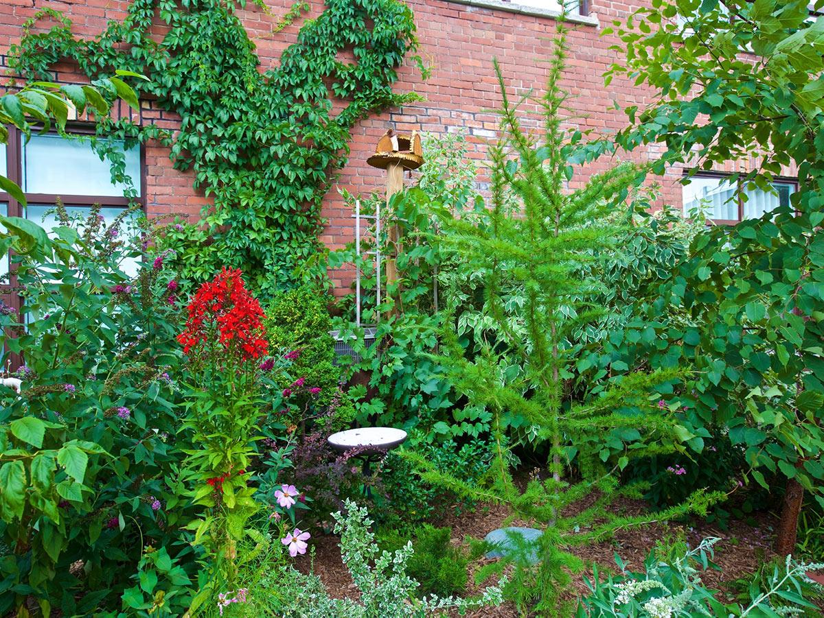 Vines climb a brick wall behind a colourful garden