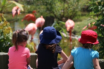 Children looking at flamingos