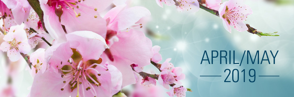 City Update banner with beautiful cherry blossom buds with the words April/May 2019