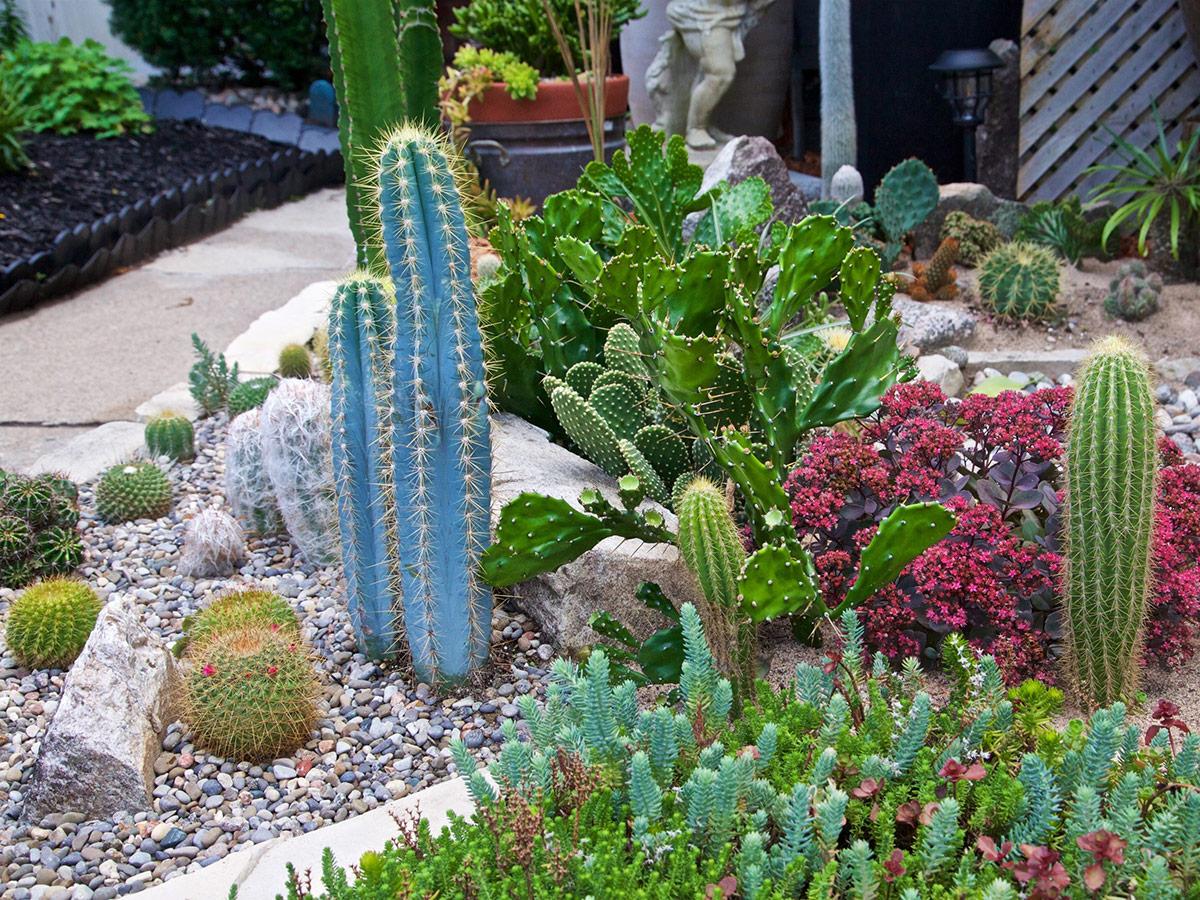 A garden of colourful cactuses