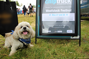 Skipper, the dog, received a microchip at a previous event