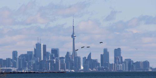 Hazy day. City Skyline, CN Tower. Birds flying over lake.