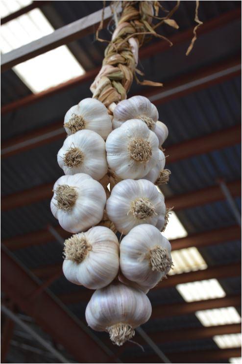 garlic bulbs on braid
