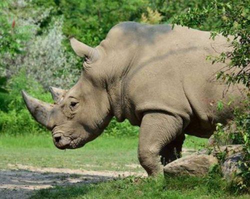 Rhino, trees. rock.