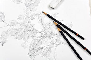 Three black pencils and an eraser placed on top of a white canvas with a pencil drawing of a branch with leaves on it.