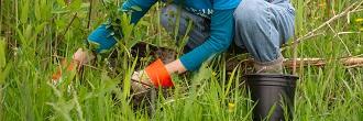 Volunteer planting a tree