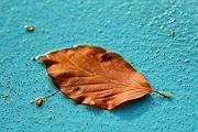 An autumn leaf on empty pool floor.
