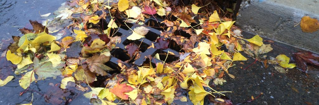 Yellow leaves piling overtop a catchbasin during the autumn season.