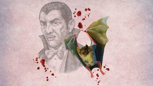 Bloodsuckers: Legends to Leeches exhibit artwork. illustration - Vampire, bat, spots of red/blood.