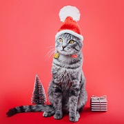 Photo of grey tabby cat wearing a holiday hat and standing by a small Christmas tree and gift.