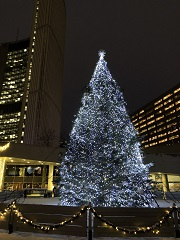 City Hall Christmas tree at Nathan Phillips Square