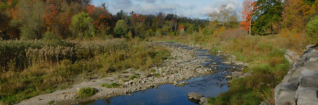 A creek runs through a wooded area