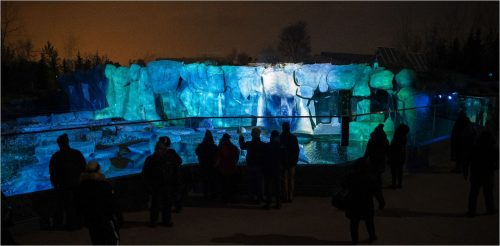 Blue projections onto rock formation at the Toronto Zoo. At night. People in the foreground.