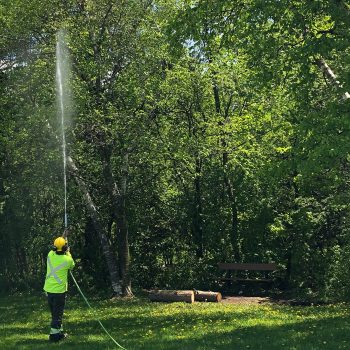 A worker sprays a long jet of pesticide into a tree