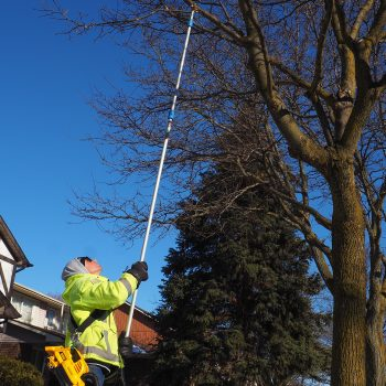 A worker on the ground holds a long tube to a high tree branch
