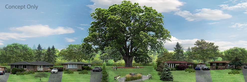 Conceptual rendering of the oak tree parkette.