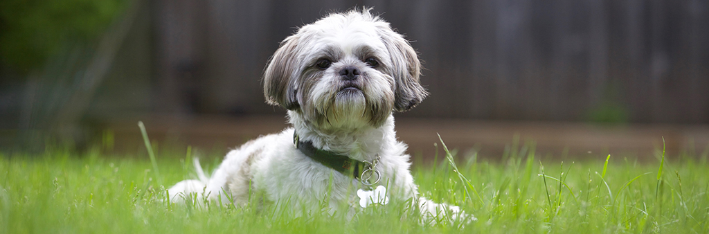 dog laying down on grass