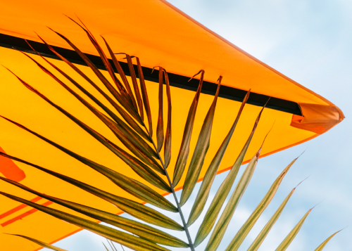 Tropical plant leaf against bright orange patio umbrella