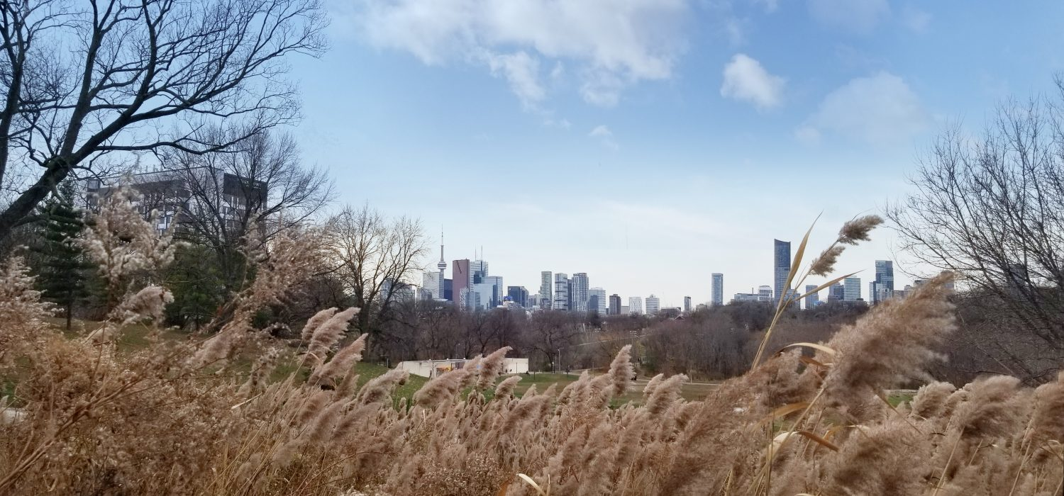 Skyline View from Riverdale Park East