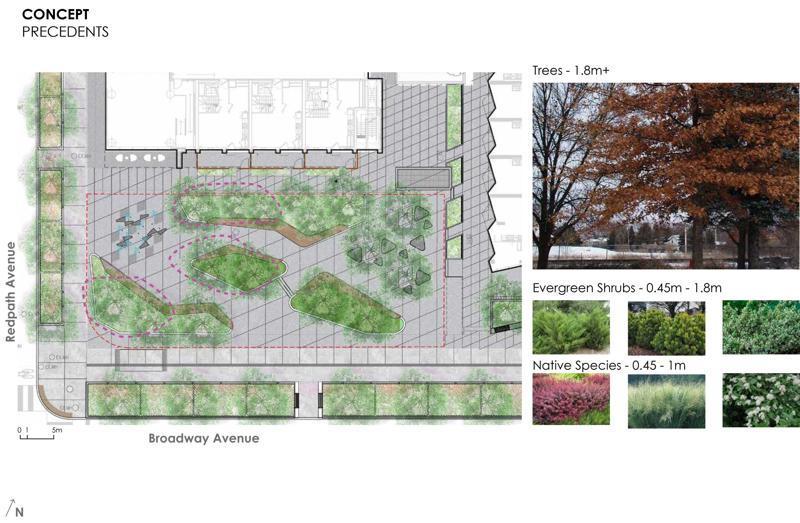 An image that provides some examples of the trees, shrubs and native plants proposed for the new park.