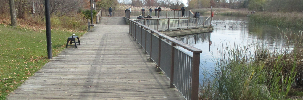 An image of the existing deck at the north edge of Pond D at Milliken Park, just south of the existing field house. The pond is surrounded mature trees and plantings. A pathway with railings runs along the edge of the pond where people can look out at nature.