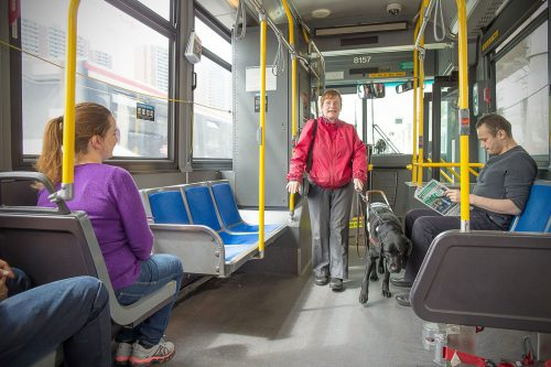 A person is led down the aisle of a bus by a black guide dog.